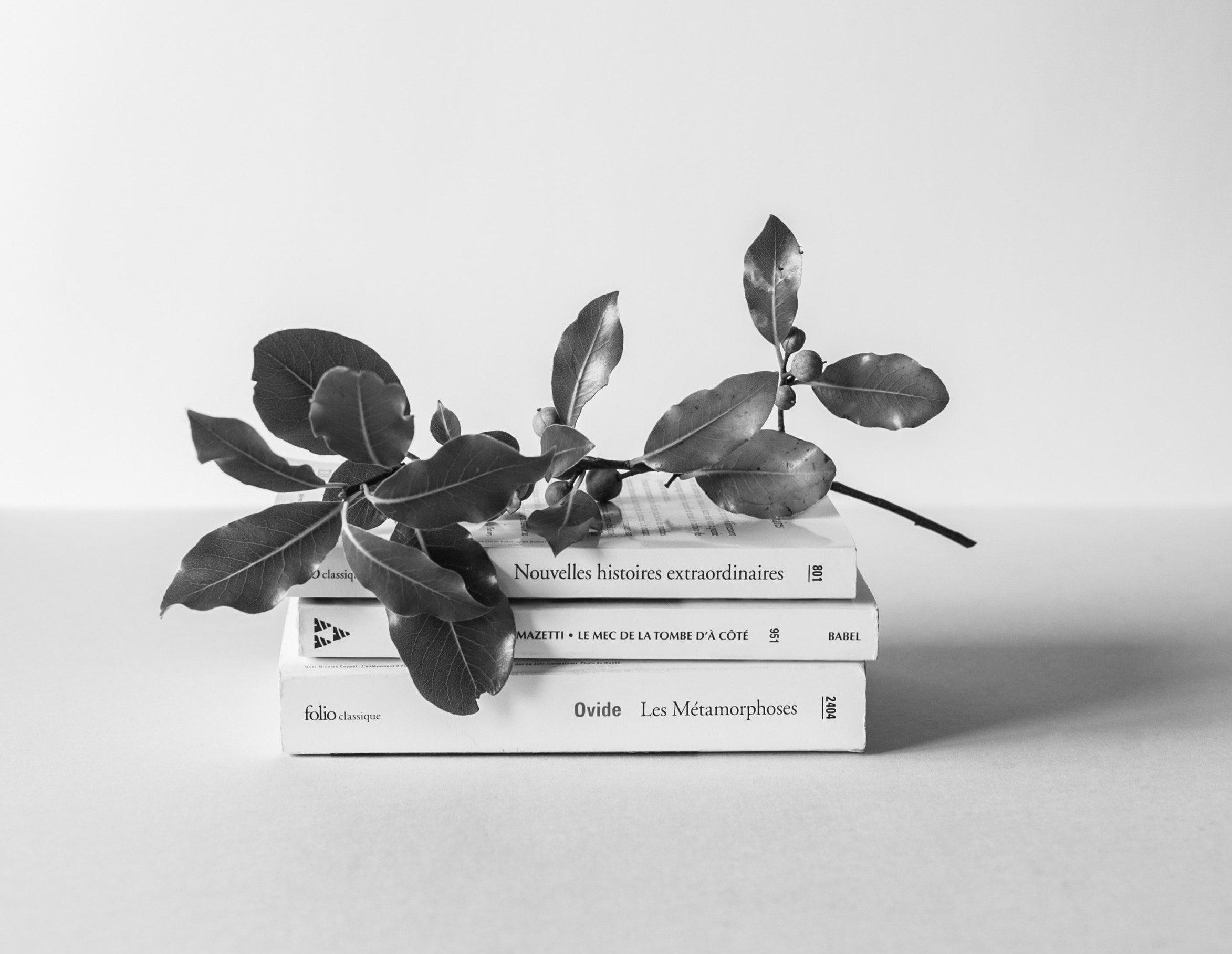 summer-reading-2019-image